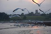 Newport, RI 2006 - Gulls take flight on second beach