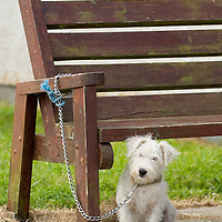 A Scottish dog waits for its owners at John O' Groats  (Caithness) Scotland Aug 5 2007