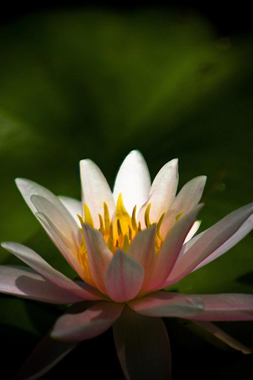 flower,landscape,fine art,