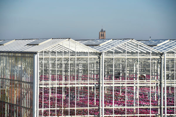 Nederland, Westland, 8-2-2018Kas, kassen in het kassengebied van het westland. Er wordt groente in gekweekt. Het gebied tussen Naaldwijk en de kust is belangrijk vanwege de tuinbouw. Hier liggen de kassen tussen de rand van de bebouwde kom en de duinen, duingebied . Foto: Flip Franssen