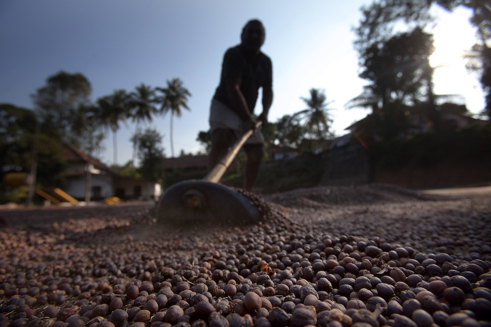"""A farmer dries coffee berries ouside his home for """"Dry"""" processing in Coorg, India,  on Saturday January 30, 2010. Photographer: Prashanth Vishwanathan/Bloomberg News"""