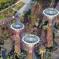 Aerial view of Supertrees at Gardens By The Bay - Singapore