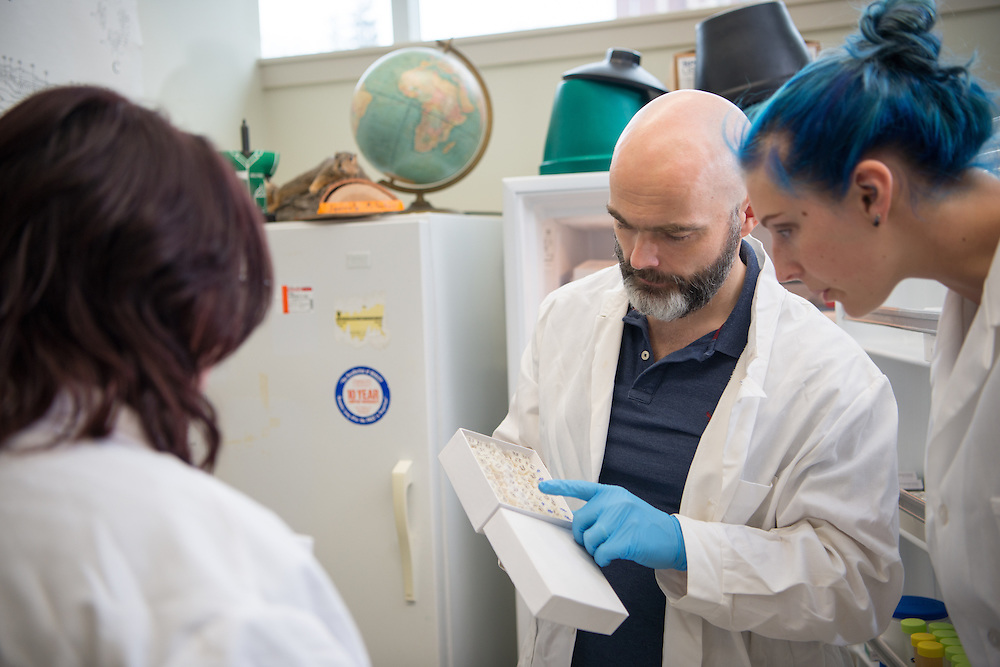 Ronan Carroll (Center), Assistant Professor in the department of Biological Sciences, works with lab students Rachel Zapf (Left) and Nikki Meyer (Right) in his lab in the Life Sciences Building on the Athens campus. © Ohio University/ Photo by Ben Siegel