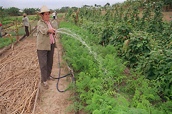 Woman watering the plants in a kitchen garden on a cooperative farm near Pinar del Rio; Cuba,
