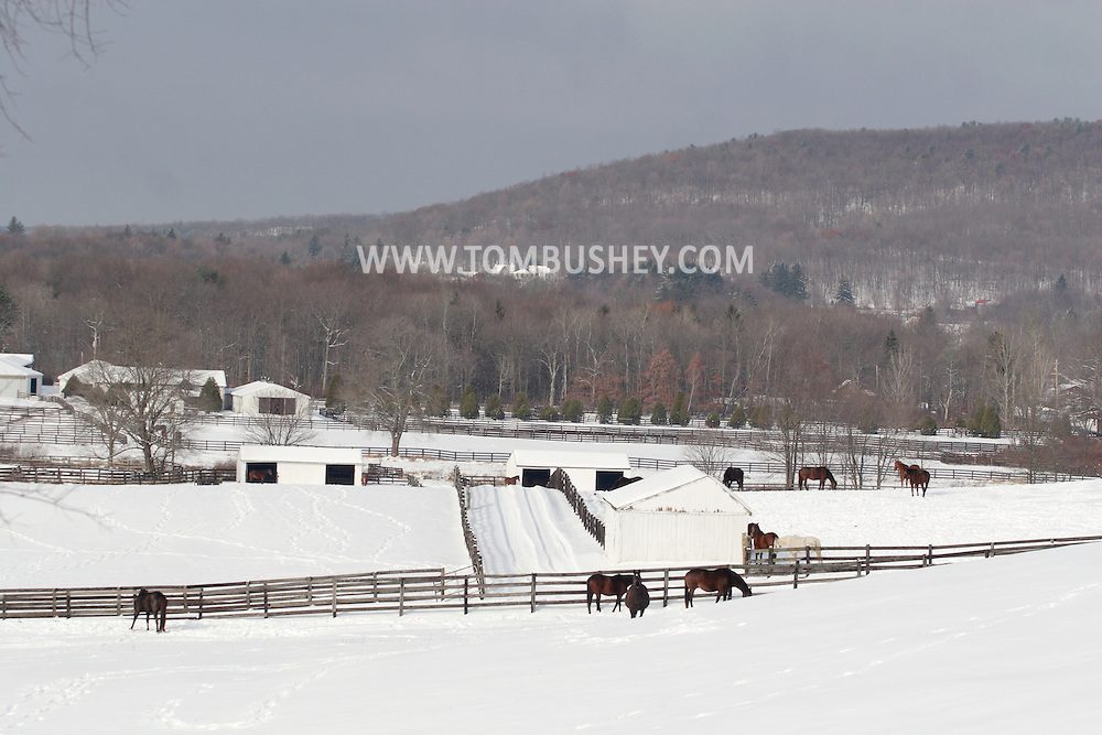 Otisville, NY - Horses stand in the fields at Hidden Lake Farm after a snowstorm on Dec. 14, 2007.