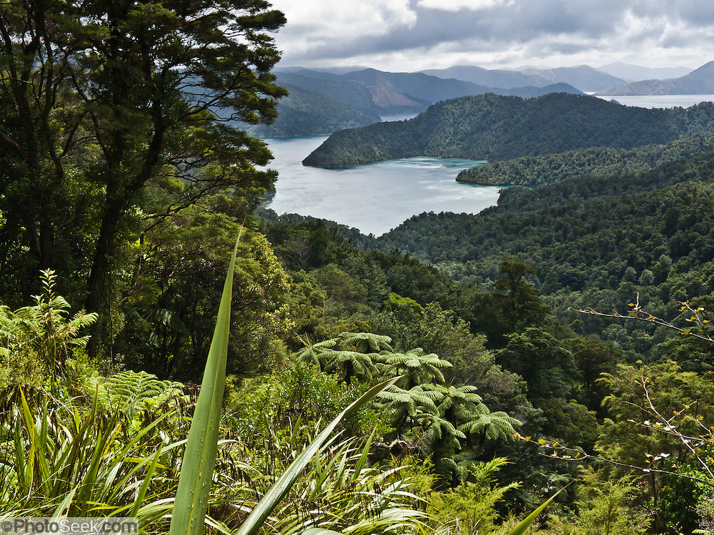 Pelorus Sound, Ngawhakawhiti Bay, Marlborough Sounds, South Island, New Zealand