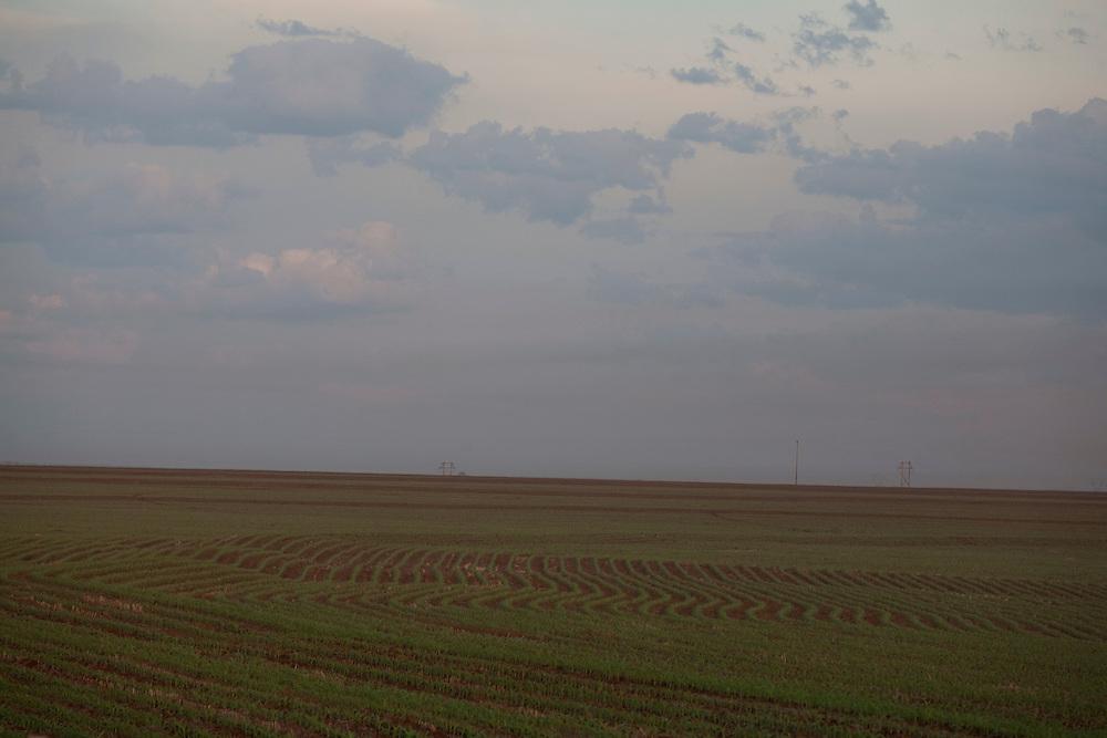Centralina_MG, Brasil...Plantacao de cana-de-acucar em Centralina, Minas Gerais...The sugar cane agriculture in Centralina, Minas Gerais...Foto: LEO DRUMOND / NITRO