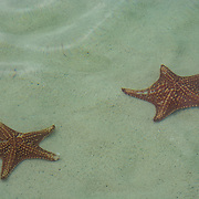 Starfish underwater. Grand Cayman Island.