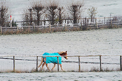 ©Licensed to London News Pictures 19/11/2019.<br /> Swanley,UK. Temperatures drop overnight making for a very cold and frosty Tuesday morning. Freezing cold weather conditions for this horse in a frozen field, Swanley, Kent. Photo credit: Grant Falvey/LNP