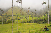 Gazing over the prehistoric landscape which is the Cocora Valley. A land of giants.