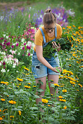 Emma Hams picking sunflowers - Helianthus annuus 'Sonja'