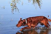 Hunting dogs - jakthunder