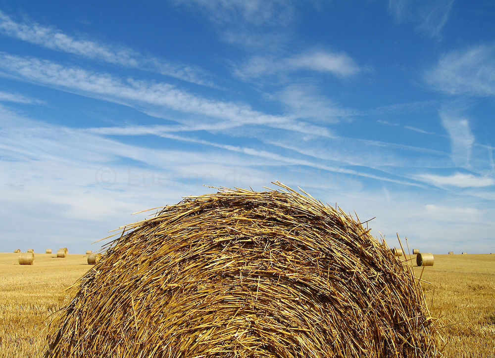 Rolls of hay from a wheat field in Yvelines department, France.