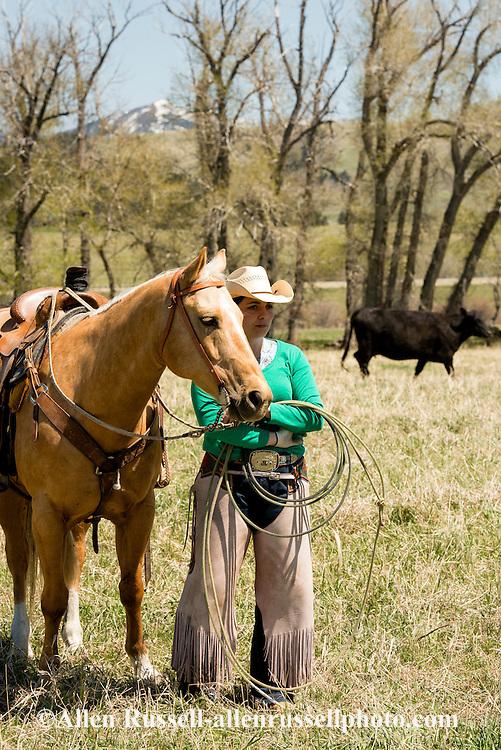 Cowgirls, Quarter Horses, branding, Lazy SR Ranch, Wilsall, Montana, Jessie Sarrazin, MODEL RELEASED, PROPERTY RELEASED