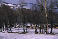 Mongolia. terelg area in khenti province under the snow