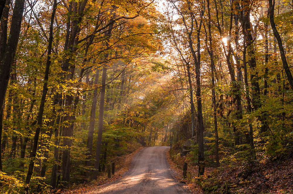 Sunrays stream into yellow woods in fall along a dirt road, Meshomasic State Forest, Portland, CT