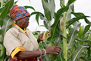 Dayinah Mauundza of the leader of the vegetable garden at Nombhela gardens co-op. With land granted to them by traditional leaders the co-op members have started a permaculture garden. They farm produce to sell and employ people from the village. The LRC has assisted the co-op to ensure secure access to the land.