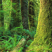 Sydney Watershed, Clayoquot Souynd, Vancouver Island, B.C.