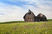Grasslands of Palouse Washington