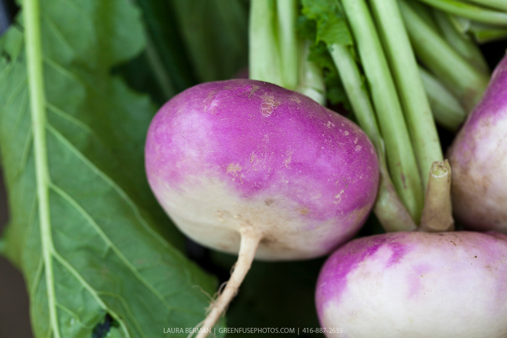 Violet top Milano Turnips (Rapa di Milano Colletto Viola).