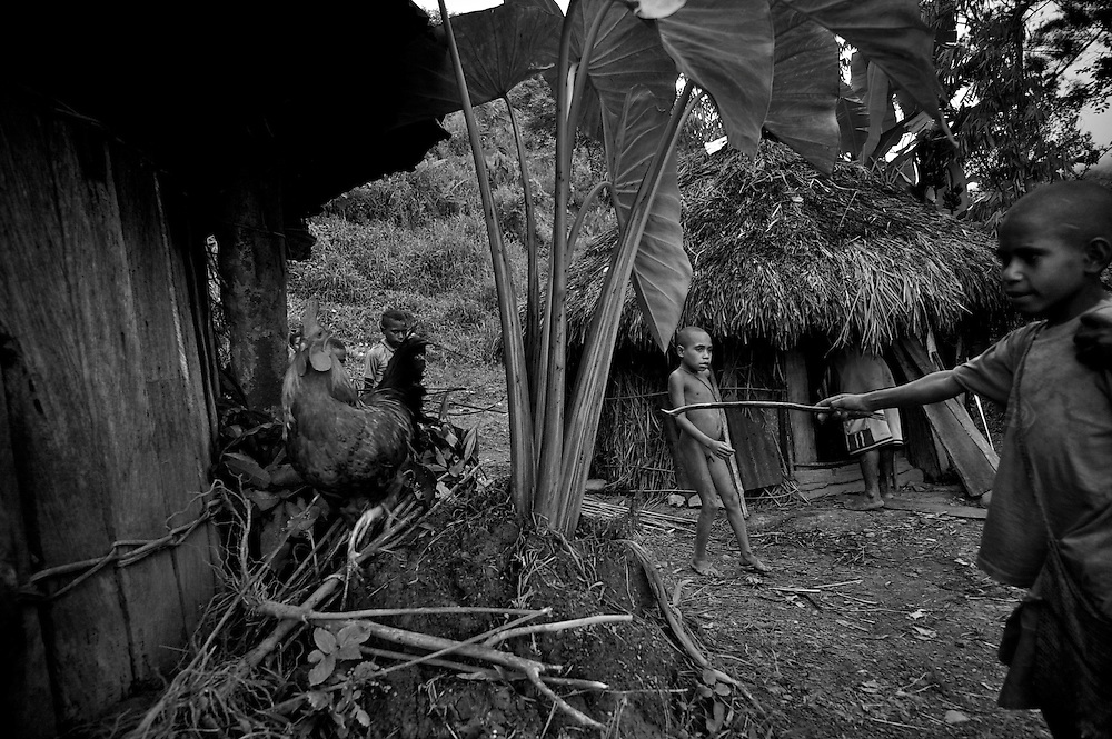 West Papua is home to over 300 tribes. They have inhabited the island for more than 40,000 years. Many of the last remaining tribal cultures on our planet can be found in West Papua. An astounding 15% of the world's languages are spoken there, by just 0.01% of the global population..The Mek tribes people live in Kosarek and the surrounding highlands of West Papua
