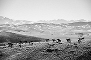 Jim Dolan's horse sculptures on a hill side in Three Forks, Montana.