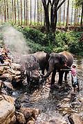 Patara Elephant Farm