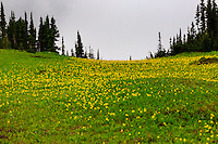 Landscape photography along the Going-to-the-Sun road through Logan Pass in Glacier National Park<br /> <br /> &copy;2016, Sean Phillips<br /> http://www.RiverwoodPhotography.com