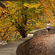 A woman runs on a trail in Rock Creek Park in Washington DC under Autumn leaves.