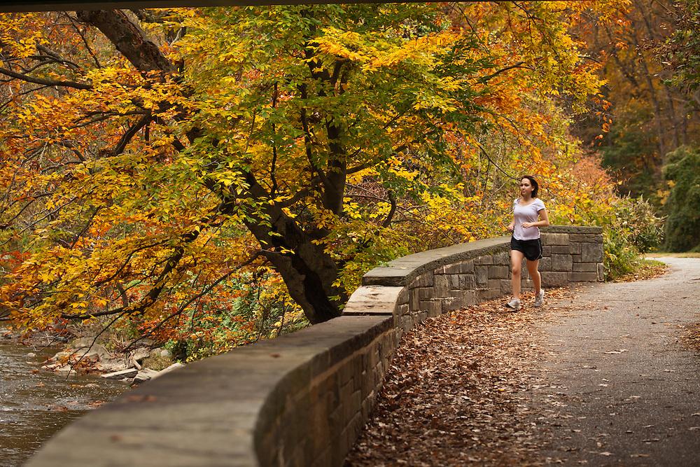 A woman runs on a trail in Rock Creek Park in Washington DC under Autumn leaves.