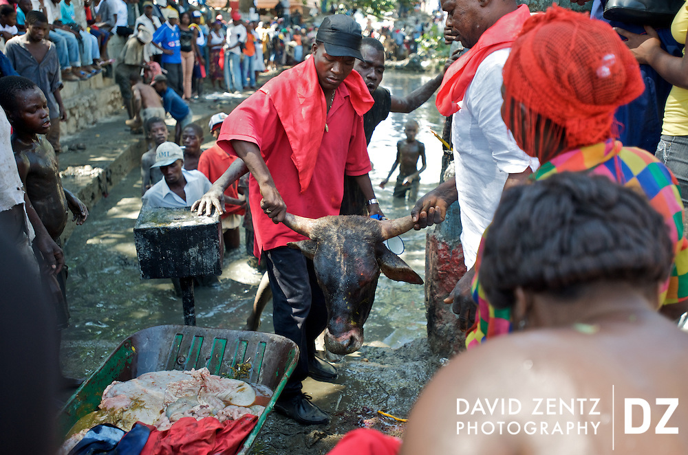 Following its sacrifice, pilgrims prepare to toss a bull's head into the sacred St. Jacques' hole, a mud pit on the edge of Plaine du Nord, Haiti, the site of an annual 2-day voodou festival held there on July 24 and 25, 2008. Animal sacrifice to appease the lwas, or spirits, are common in Haitian voodou. At Plaine du Nord pilgrims worship the lwa Ogou, who presides over matters of war, politics, iron and fire, and also Saint James, the Catholic warrior saint. Catholicism and voodou are forever intertwined in Haiti.