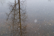 Details of nature and tranquil landscapes after a recent snowfall in winter.