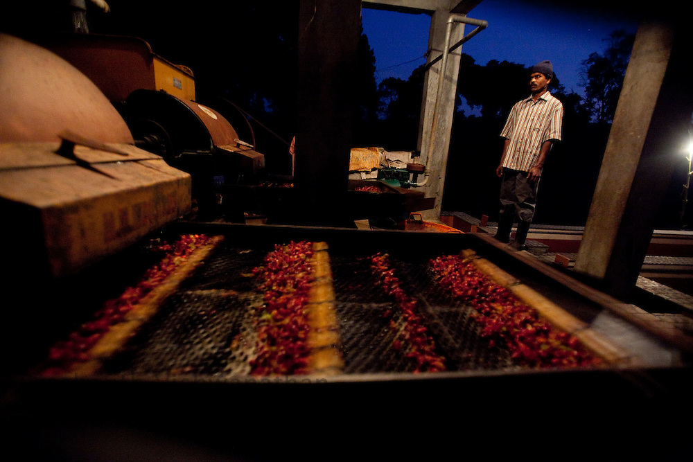 "Coffee beans are processed through ""Wet"" process at a factory in Coorg, India,  on Saturday January 30, 2010. Photographer: Prashanth Vishwanathan/Bloomberg News"