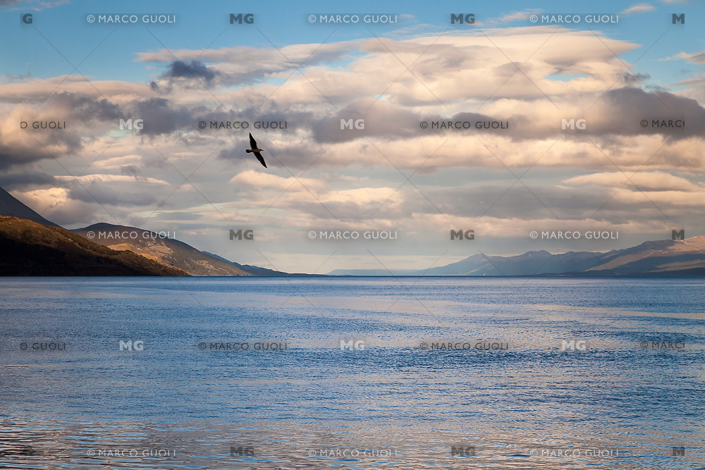 CANAL BEAGLE, GAVIOTA VOLANDO Y NUBES AL ATARDECER, USHUAIA, PROVINCIA DE TIERRA DEL FUEGO, ARGENTINA (PHOTO BY © MARCO GUOLI - ALL RIGHTS RESERVED. CONTACT THE AUTHOR FOR ANY KIND OF IMAGE REPRODUCTION)