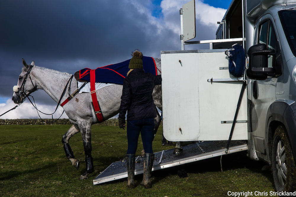Corbridge, Northumberland, England, UK. 28th February 2016.  Racehorse 'Probably George' exits his horsebox ready for action at the Tynedale Hunt annual Point to Point horse racing fixture.