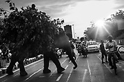 4th September 2014, New Delhi, India. An elephant loaded with fodder pillaged from the city's trees is ridden by a handler across a busy road as a passing cyclist clasps his hand to his chest in veneration, New Delhi, India on the 4th September 2014. Elephants are revered in India due to their enshrinement in many and various religious traditions and beliefs. <br /> <br /> Elephant handlers (Mahouts) eke out a living in makeshift camps on the banks of the Yamuna River in New Delhi. They survive on a small retainer paid by the elephant owners and by giving rides to passers by. The owners keep all the money from hiring the animals out for religious festivals, events and weddings, they also are involved in the illegal trade of captive elephants. The living conditions and treatment of elephants kept in cities in North India is extremely harsh, the handlers use the banned 'ankush' or bullhook to control the animals through daily beatings, the animals have no proper shelters are forced to walk on burning hot tarmac and stand for hours with their feet chained together. <br /> <br /> PHOTOGRAPH BY AND COPYRIGHT OF SIMON DE TREY-WHITE + 91 98103 99809<br /> email: simon@simondetreywhite.com<br /> Photographer in Delhi