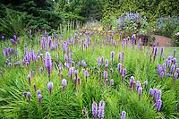 VanDusen Botanical Garden, Vancouver, B.C.
