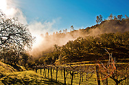 early morning fog rolling in on a Chiles Valley vineyard. Napa Valley, California. Brown Estate.