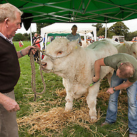 Michael and his son Barry Quinn from Newmarket on Fergus with their entry for the cattle classes in Scarriff Agricultural Show 2014