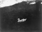 The simple life by  Gertrude Käsebier,  1852-1934, photographer photomechanical print  [1907]