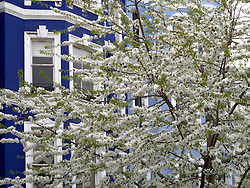 UK ENGLAND LONDON 3APR11 - View of properties in the leafy quarter of Notting Hill, west London...jre/Photo by Jiri Rezac..© Jiri Rezac 2011