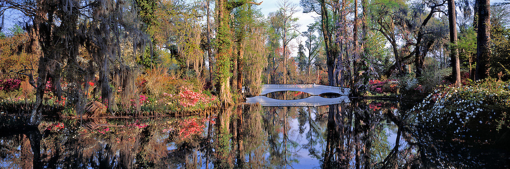 Trees, flowers and a white bridge are popular features at Magnolia Plantation, South Carolina.