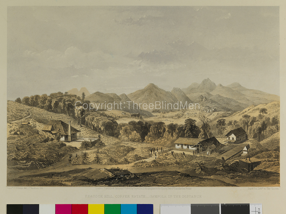 Peacock Hill Coffee Estate, Gampola in the distance. Capt. O'Brien.<br /> credited to British Library.
