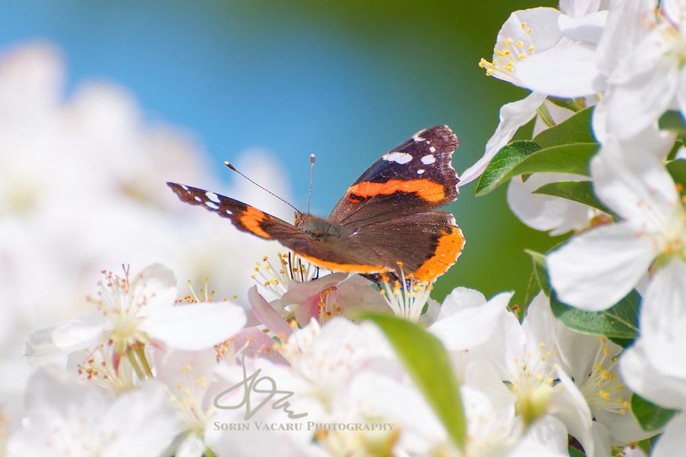 Spring in Edwards Gardens
