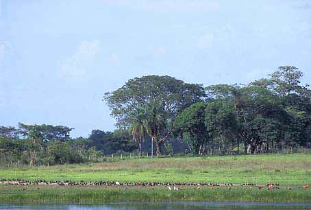 Llanos y laguna, Edo. Cojedes, Venezuela.
