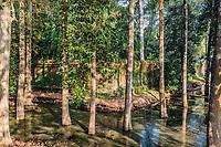 trees in moat Angkor Thom Cambodia