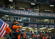 The Oriole Bird holds an American Flag on opening day at Oriole Park at Camden Yards in Baltimore, Monday, April 4, 2016.  The Baltimore Orioles defeated the Minnesota Twins 3-2.