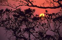 The sun setting through trees in a rainforest, Hong Kong