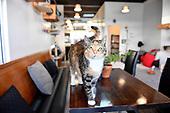 20180108 Neko Ngeru Cat Adoption Cafe