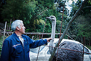 Tomioka, May 2 2012 - Naoto Matsumura, 52, refuses to leave the Fukushima nuclear evacuation zone. Since April 2011, he lives alone in his house without electrcicity and takes care of pets in the area, including ostriches.